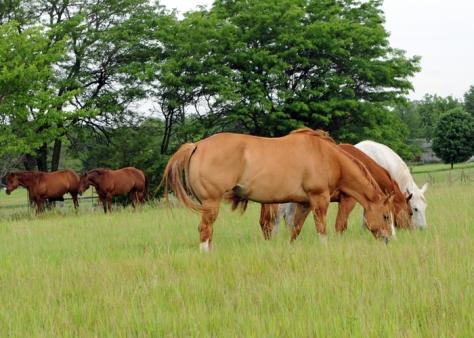 dsc_0819-mares-grazing
